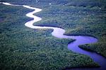 River through black mangrove