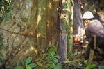 Logger cutting down a rainforest tree
