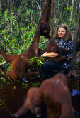 Birute Galdikas feeding ex-captive juvenile orangutans fruit (called papong).