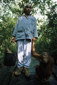 Park Ranger taking a Bornean Orangutan to the feeding station at Pelindungan Hutan Dan Pelestarian Alam