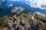 Limestone in Pine Glades Lake
