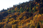 Autumn trees at Newfound Gap