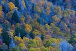 Autumn scene at Sugarland Mountain
