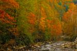 Little River autumn scene