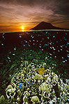 Sunset with hard corals and small reef fish just beneath the water's surface at Bunaken Island, Manado Tua Marine National Park, Indonesia
