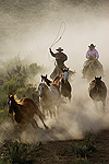 Cowboy and cowgirl herding Horses (Equus caballus) Oregon