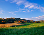 Hay and Cornfields in Evening Light With Fall Foliage
