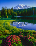 Mount Rainier, Red Heather, and Reflection Lakes, Mount Rainier National Park, WA