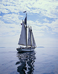 "The Schooner ""Appledore"" Leaving Camden Harbor, West Penobscot Bay"