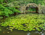 Pink Water Lilies and Stone Bridge at Gillette Castle State Park, East Haddam, CT