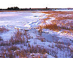 Salt Marsh off Orient Harbor, Long Island