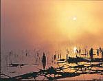 Sunburst at Pickthorne Lake at Sunrise, Jacksonville, AR