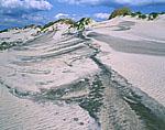 Dunes at Pea Island National Wildlife Refuge, Cape Hatteras National Seashore