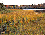 Salt Marsh in Fall