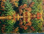 Fall Colors at Peck Pond, Casimir Pulaski Memorial State Park