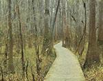 Bottomland Forest and Boardwalk
