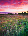 Predawn over Wildflower Meadow at Lake Wampanoag Wildlife Sanctuary, Gardner, MA