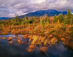 Golden Grasses at Stump Pond with Mt. Katahdin in Background, Baxter State Park, Maine