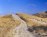 Old Fire Road Over and Into Dunes, Cape Cod National Seashore