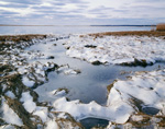 Iced In Nauset Salt Marsh, Cape Cod National Seashore
