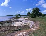 Florida Bay Coastline with Great Blue Herons (White Phase), Flamingo