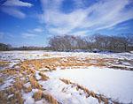 Salt Marsh with Snow on a Sunny Winter Day, Warton Point