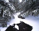Roaring Brook and Hemlocks in Winter