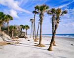 Palm Trees on Beach, Hunting Island State Park, Hunting Island, SC