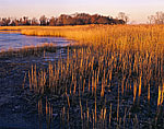 Marsh in First Light, Salem River, Mannington Meadow