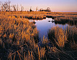 Salt Marsh in Late Light, Mouth of Delaware River/Delaware Bay