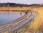 Beach and Reeds, Dividing Creek, Delaware Bay