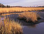 Marsh in Dividing Creek Watershed, Delaware Bay, Village of Dividing Creek