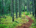 Trail through Coastal Fog Forest, Crockett Cove Woods Preserve