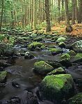 Rutland Brook in Spring, Massachusetts Audubon Wildlife Sanctuary