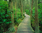 White Cedar Swamp Trail, Cape Cod National Seashore