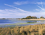 Goose Pond and Marsh, Chincoteague National Wildlife Refuge