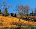Rural Landscape near Sycamore, VA
