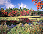 Lawrence Brook with Fall Foliage