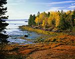 Maine Shoreline in Fall