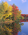 Fall Reflections, Whitney Pond