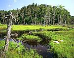 Fen along North Alder Brook, Green Mountains National Forest