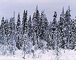 Spruce Bog Winter Wonderland, Adirondack Park