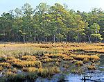 Salt Marsh near Blackwater National Wildlife Refuge