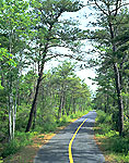 Bike Trail Through Pitch Pine Forest