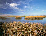 Fresh Water Marsh, Colusa National Wildlife Refuge