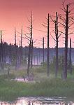 Sunset at Wetlands in Birch Hill Wildlife Area