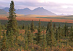 Alaska Range from Savage River Area