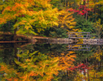 Footbridge and Foliage Reflecting in a Small Pond, Granville State Forest, Berkshire Mountains, Granville, MA