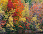 Fall Color of Maples and Birch along Shoreline of Otis Reservoir