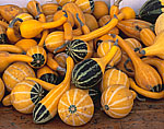 Assortment of Newly-harvested Gourds